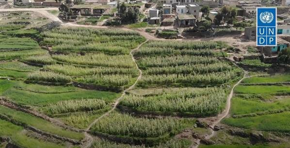 The Sustainable Land Management (SLM) project interventions in Serejeka sub-zone